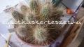 Echinocereus stramineus telep